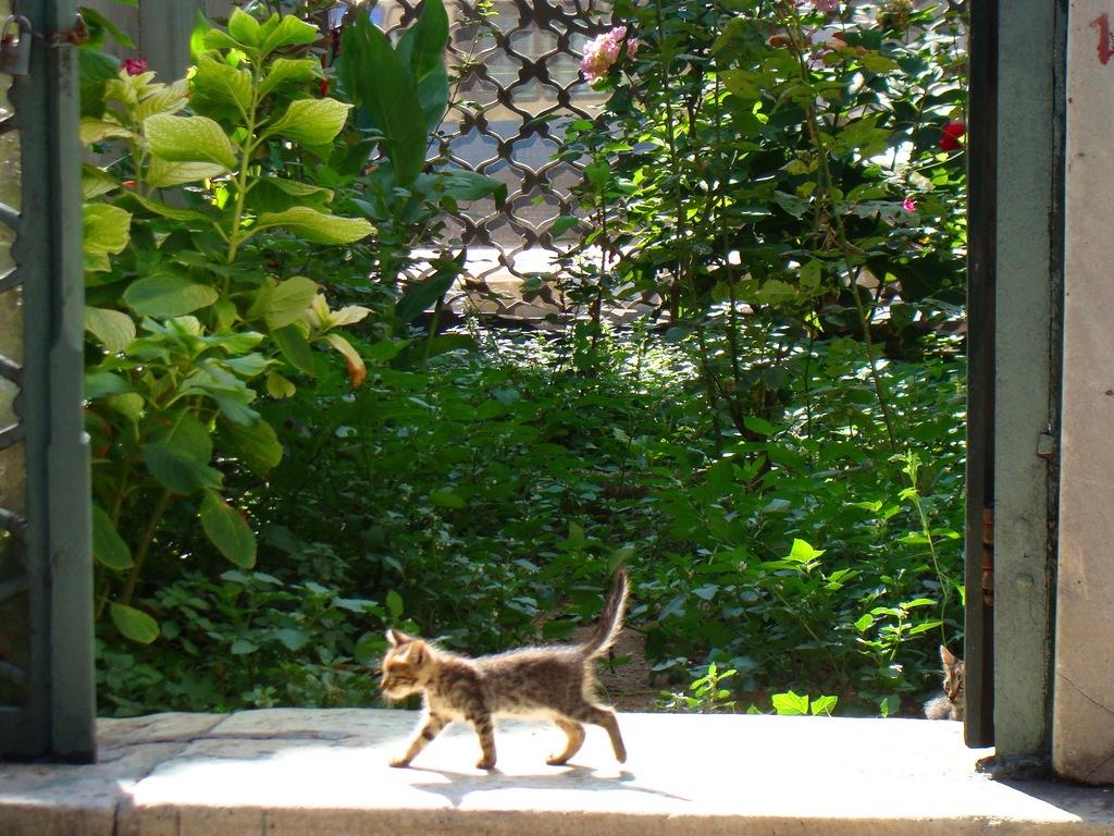 Parc dijon animaux for Jardin japonais dijon